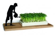 Kresseschale Gärtner smart n green