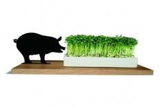 Kresseschale Schwein smart n green