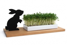 Kresseschale Hase smart n green